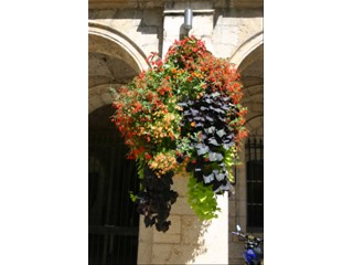 Hanging baskets Sifu 2